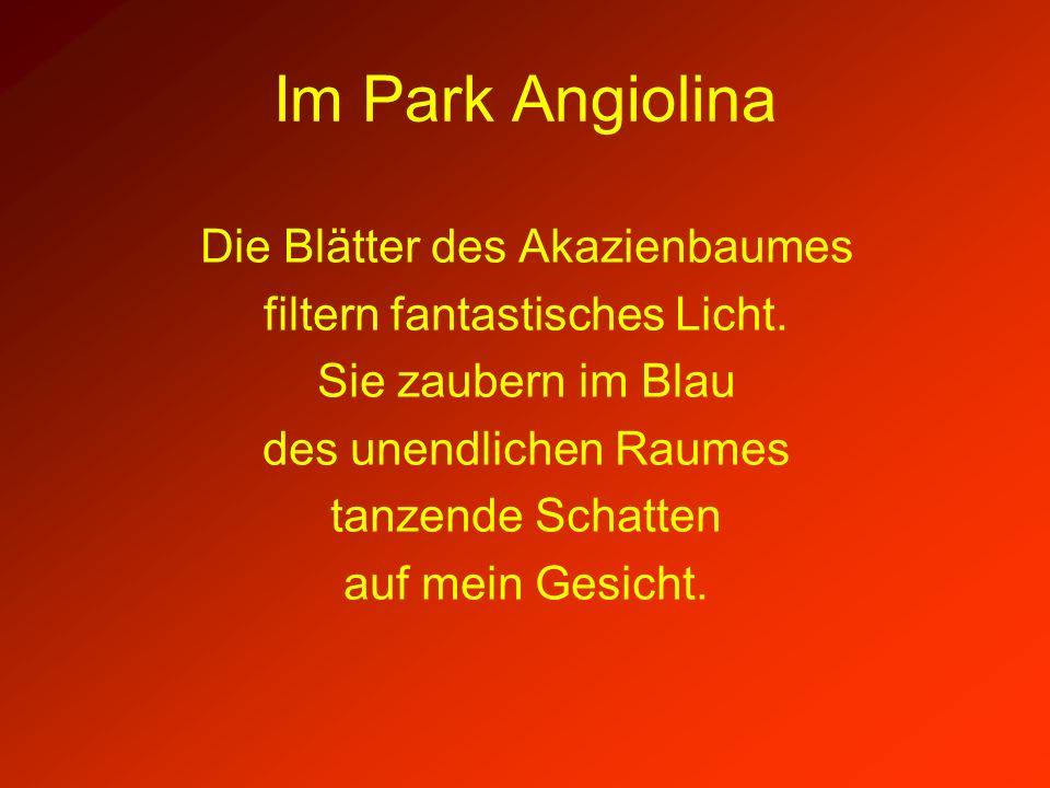 Im Park Angiolina Die Blätter des Akazienbaumes
