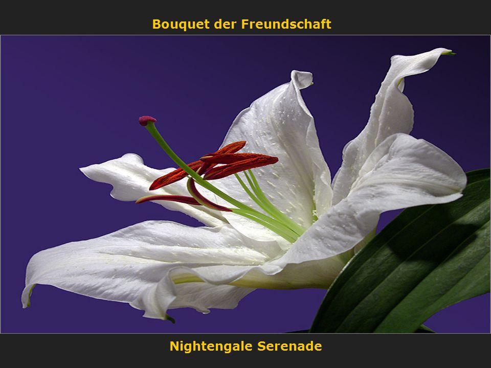 Bouquet der Freundschaft