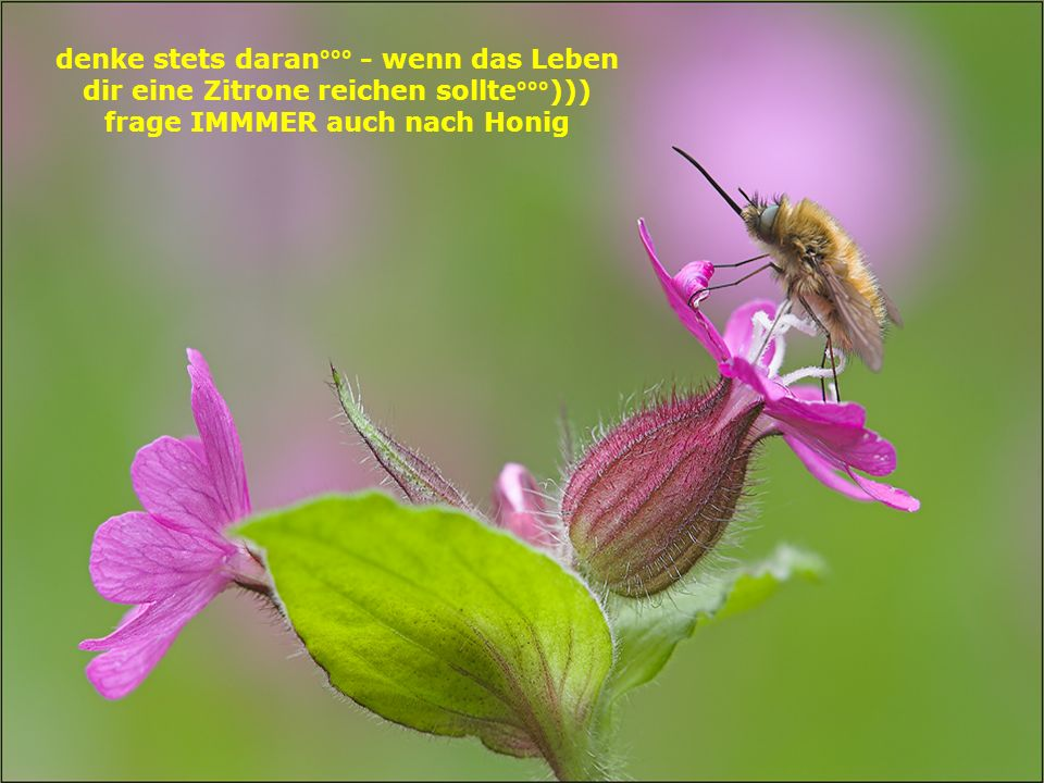 denke stets daran°°° - wenn das Leben dir eine Zitrone reichen sollte°°°))) frage IMMMER auch nach Honig