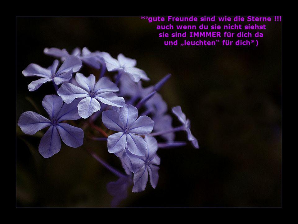 °°°gute Freunde sind wie die Sterne !!!