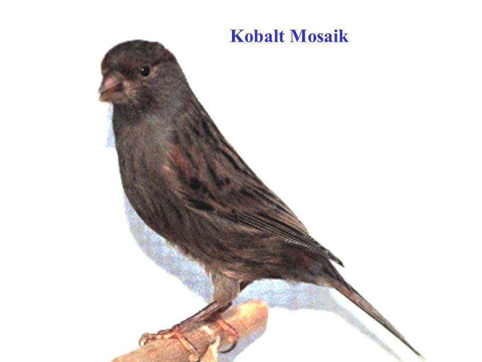 Kobalt Mosaik