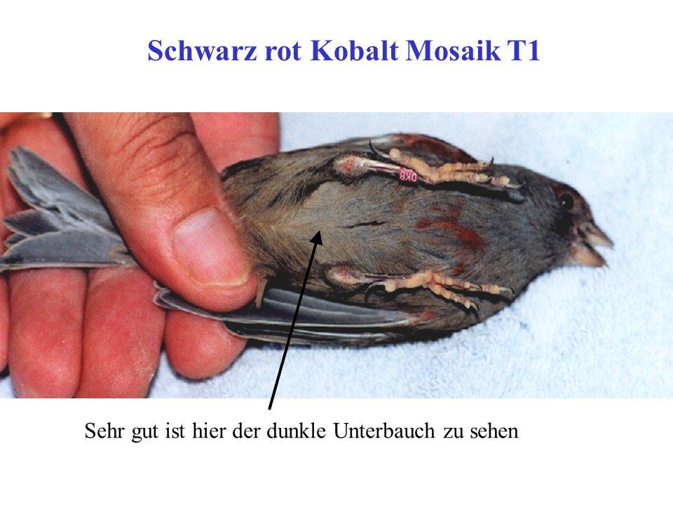 Schwarz rot Kobalt Mosaik T1
