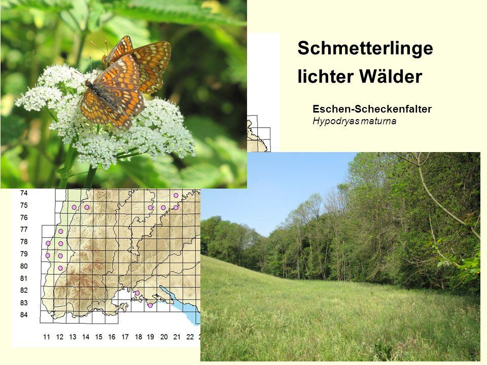 Schmetterlinge lichter Wälder