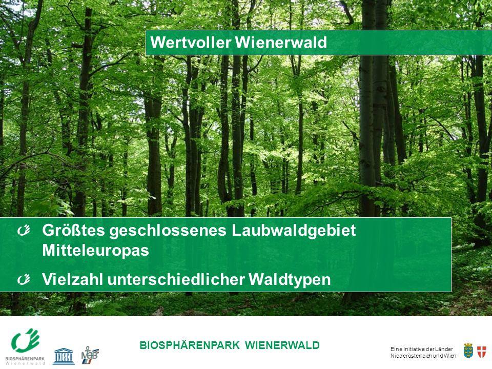 Wertvoller Wienerwald