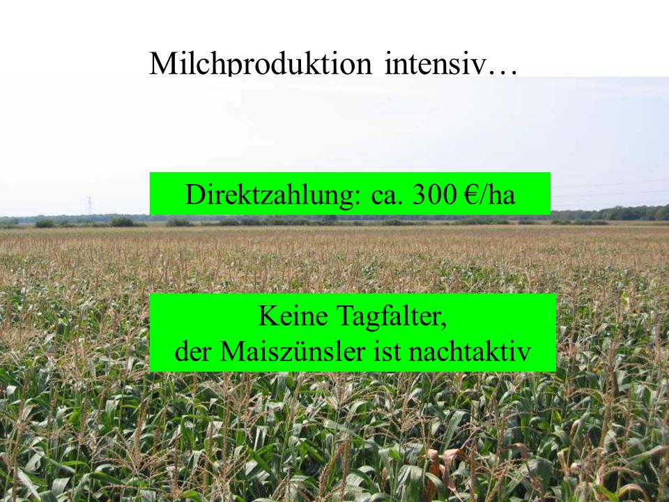 Milchproduktion intensiv…