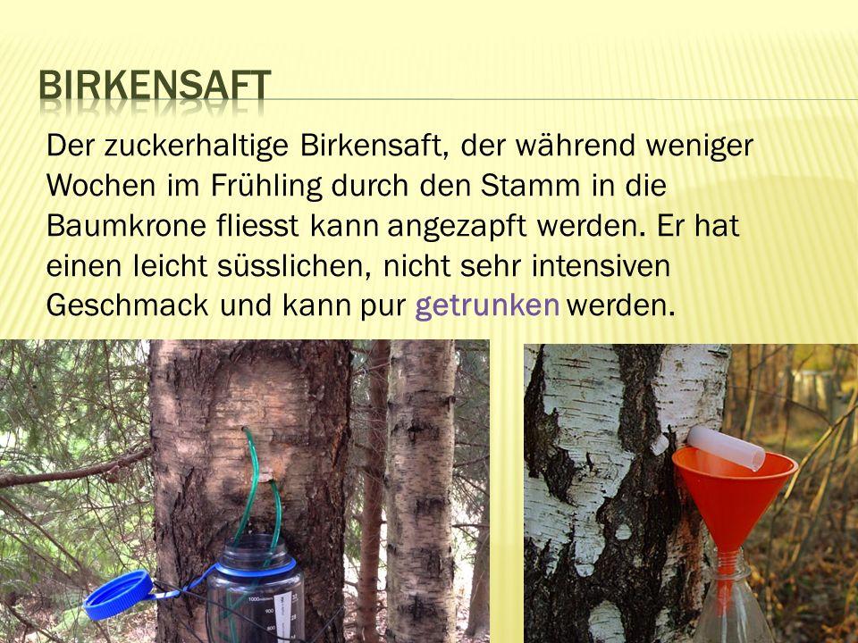 Birkensaft