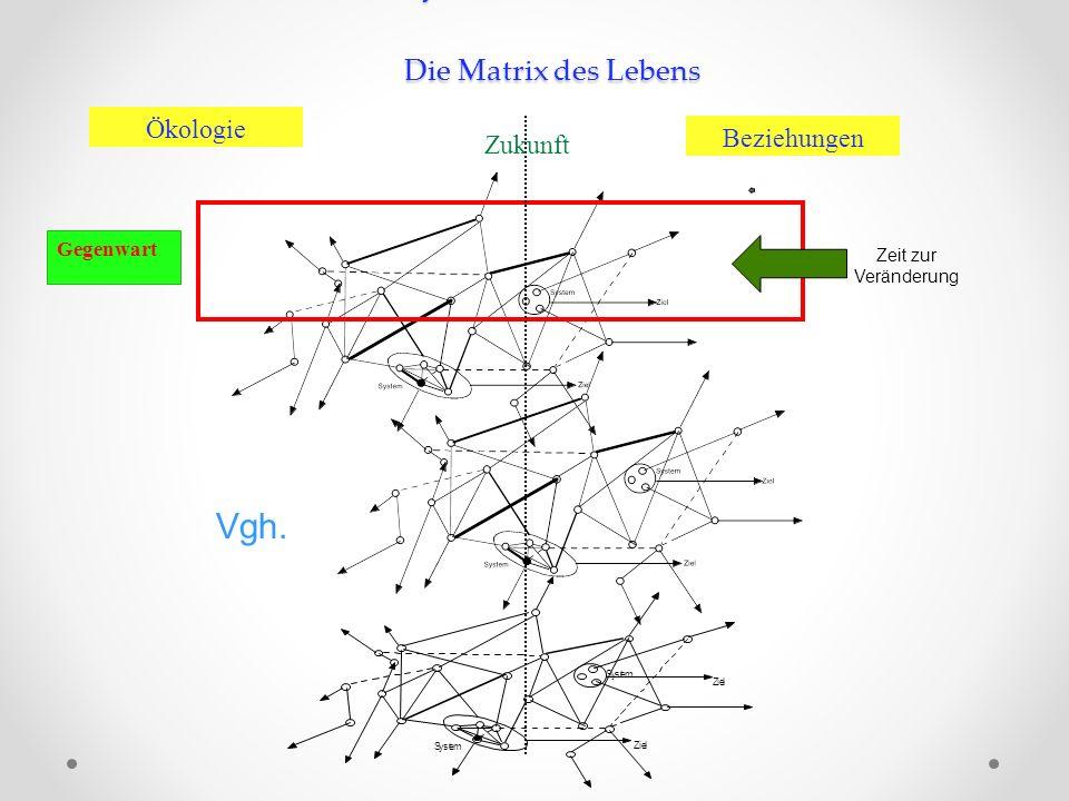 Netzwerk und Systeme Systeme im Netzwerk Die Matrix des Lebens