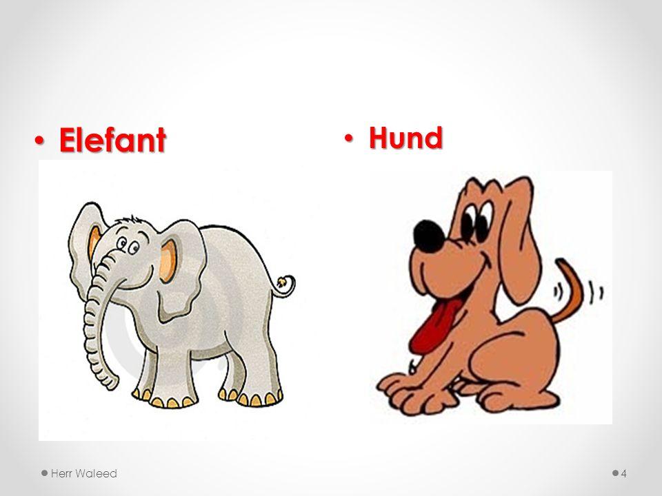 Elefant Hund Herr Waleed