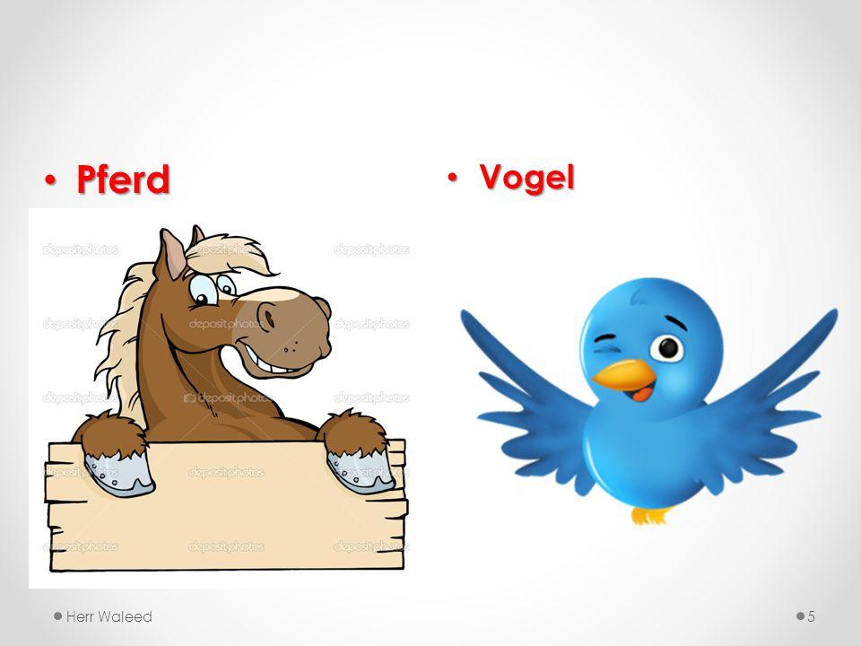 Pferd Vogel Herr Waleed