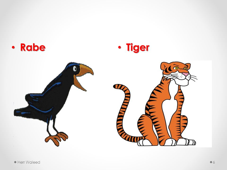 Rabe Tiger Herr Waleed