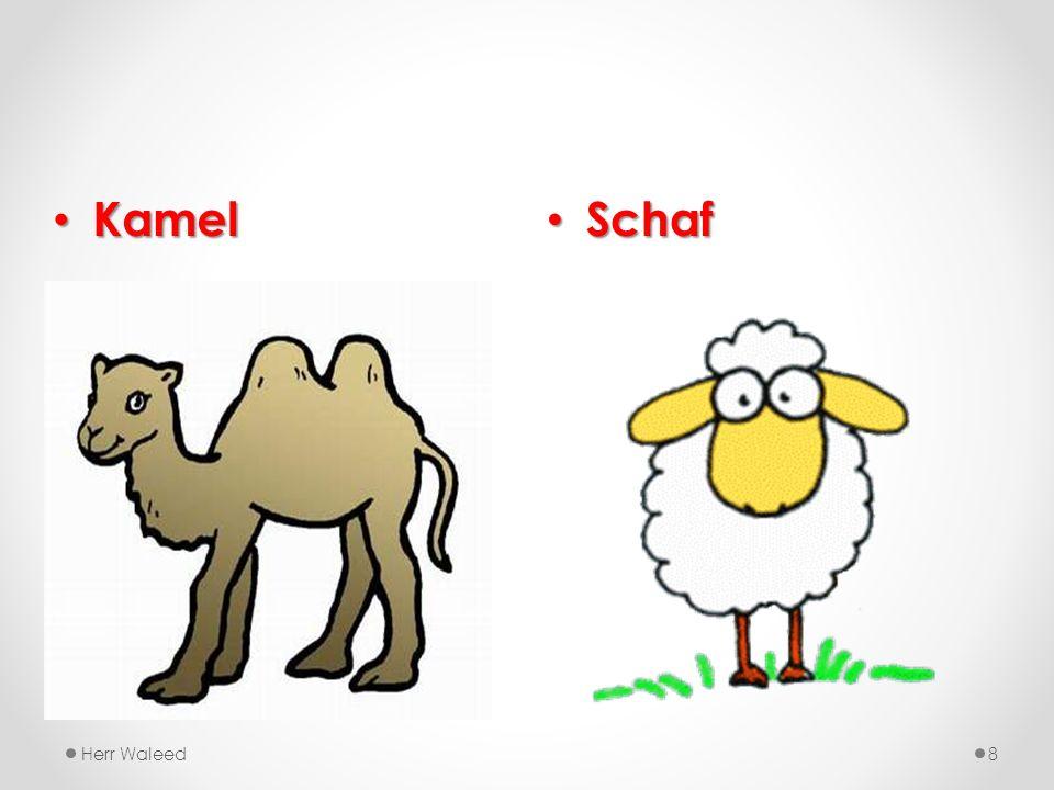 Kamel Schaf Herr Waleed