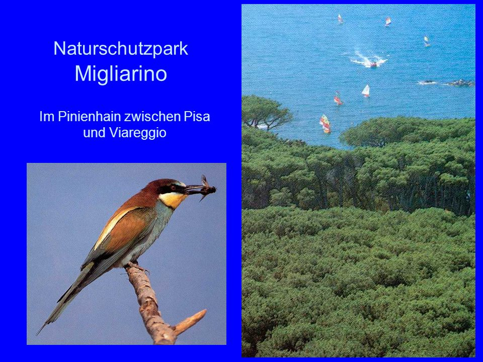 Naturschutzpark Migliarino