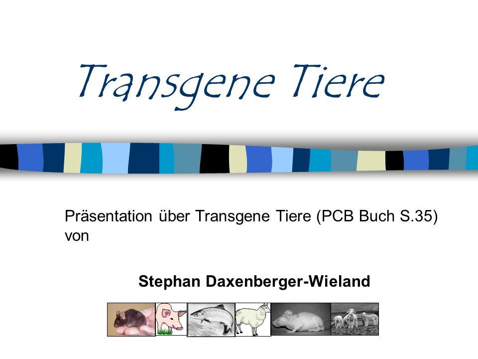 Stephan Daxenberger-Wieland