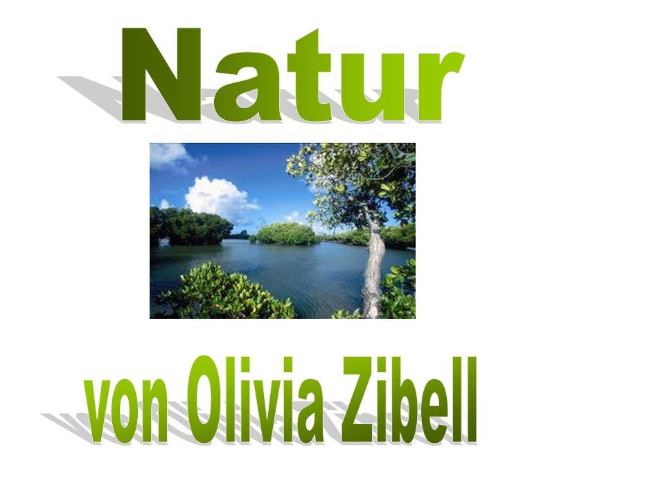 Natur von Olivia Zibell