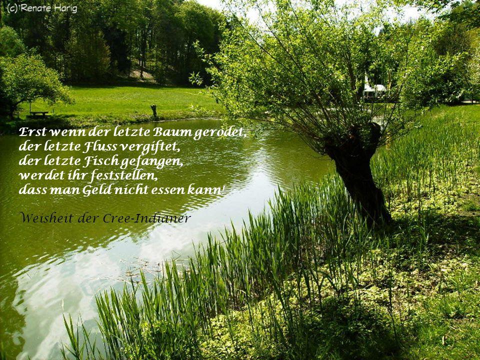 Erst wenn der letzte Baum gerodet, der letzte Fluss vergiftet, der letzte Fisch gefangen, werdet ihr feststellen, dass man Geld nicht essen kann.
