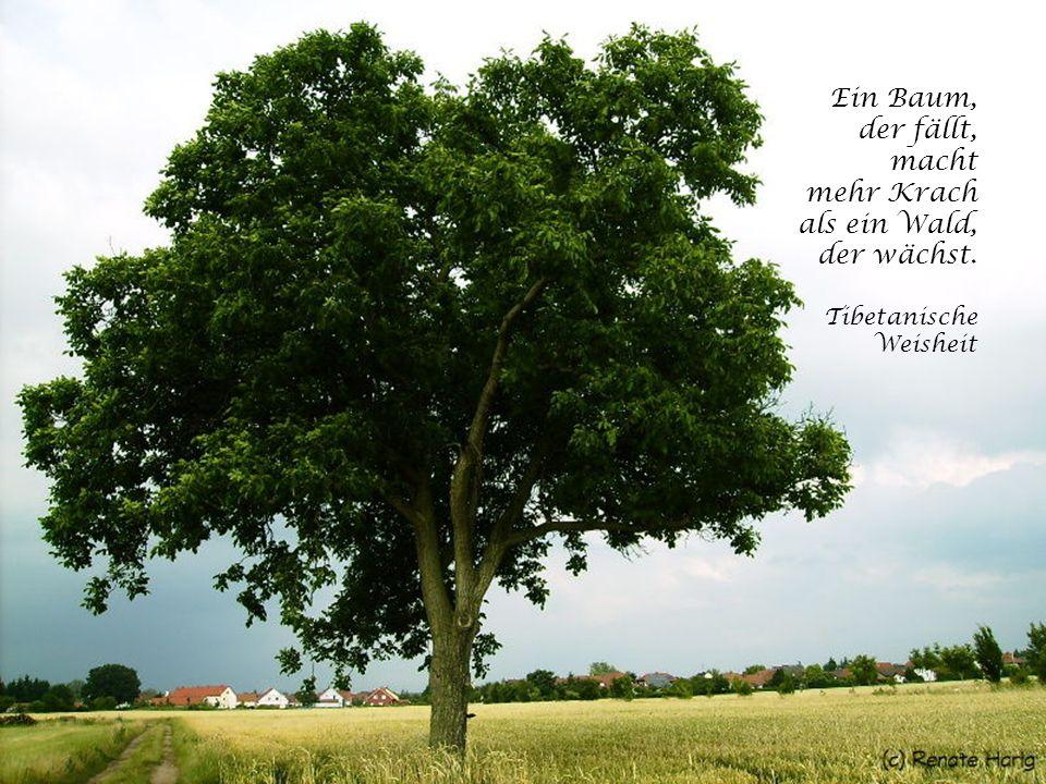 Ein Baum, der fällt, macht mehr Krach als ein Wald, der wächst