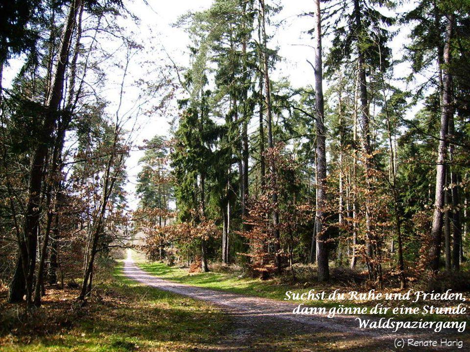 Suchst du Ruhe und Frieden, dann gönne dir eine Stunde Waldspaziergang