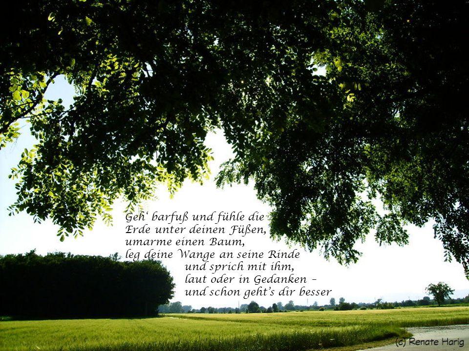 Geh' barfuß und fühle die Erde unter deinen Füßen, umarme einen Baum, leg deine Wange an seine Rinde und sprich mit ihm, laut oder in Gedanken – und schon geht's dir besser