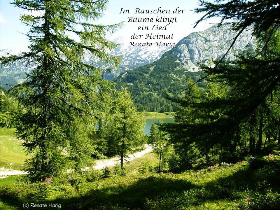 Im Rauschen der Bäume klingt ein Lied der Heimat Renate Harig