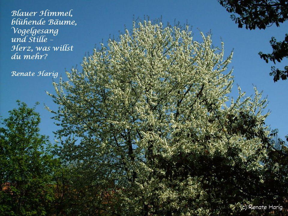 Blauer Himmel, blühende Bäume, Vogelgesang und Stille – Herz, was willst du mehr Renate Harig