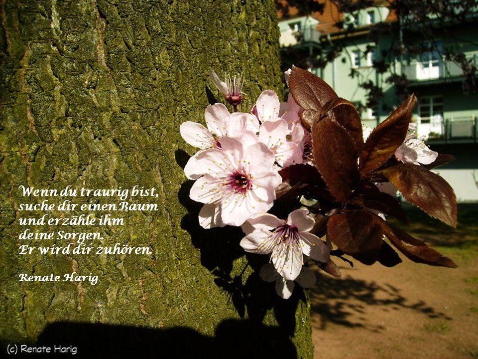 Wenn du traurig bist, suche dir einen Baum und erzähle ihm deine Sorgen.