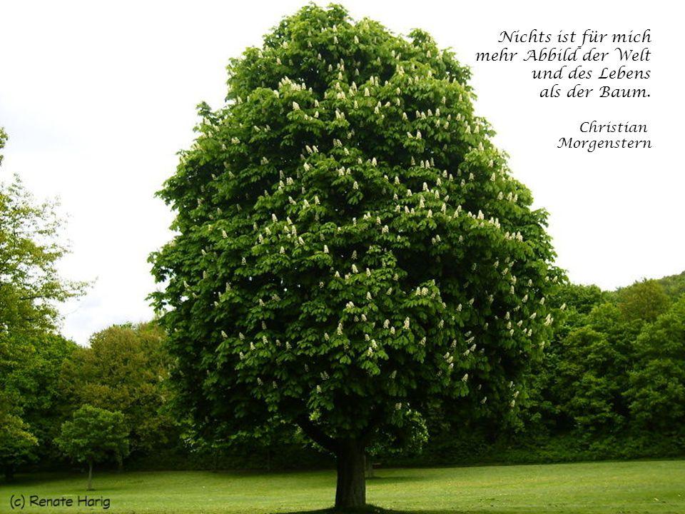 Nichts ist für mich mehr Abbild der Welt und des Lebens als der Baum.