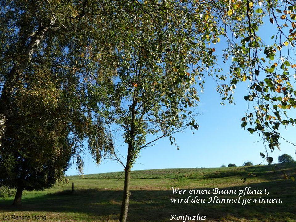 Wer einen Baum pflanzt, wird den Himmel gewinnen. Konfuzius