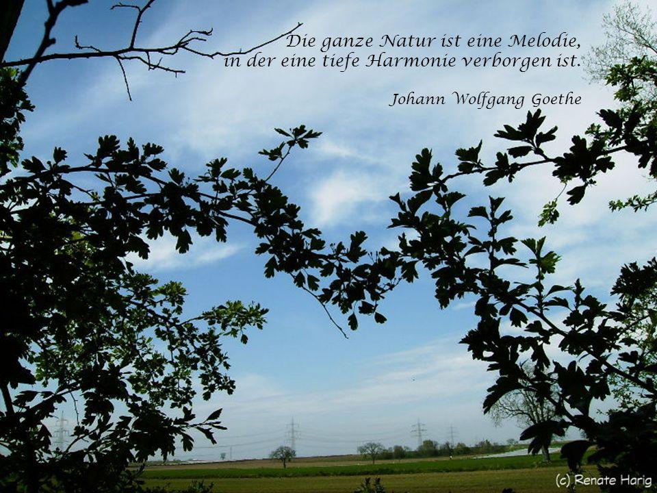 Die ganze Natur ist eine Melodie, in der eine tiefe Harmonie verborgen ist. Johann Wolfgang Goethe