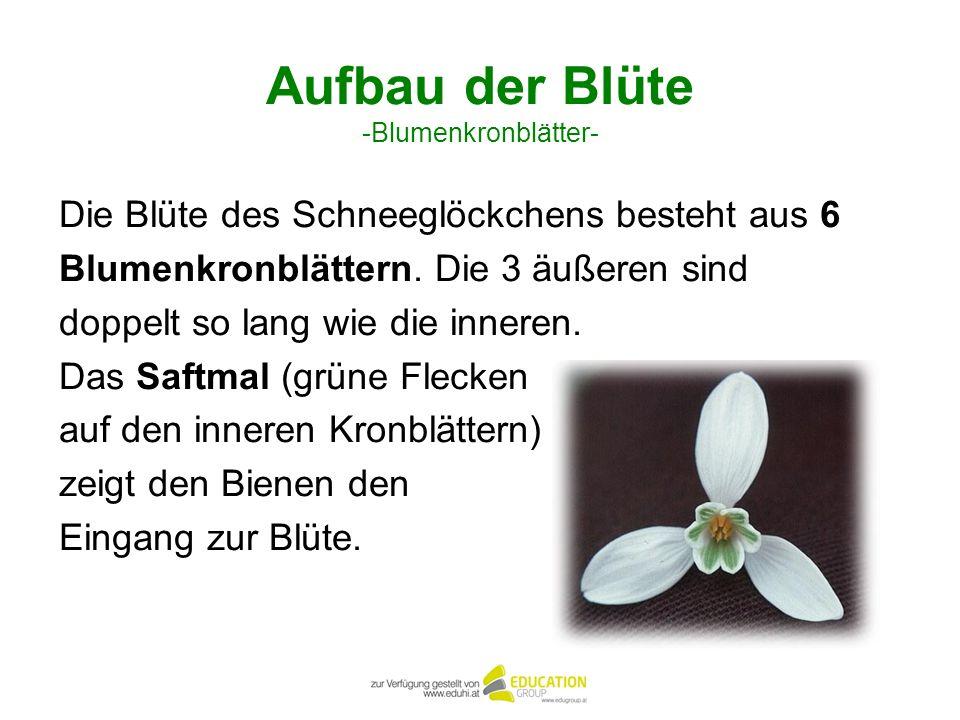Aufbau der Blüte -Blumenkronblätter-