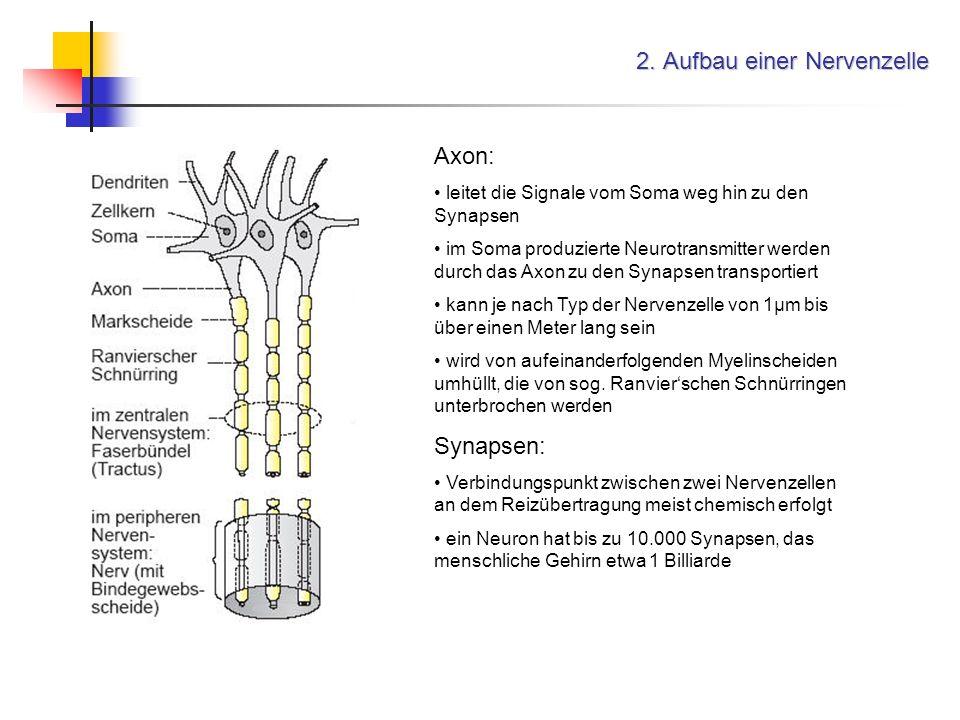 2. Aufbau einer Nervenzelle