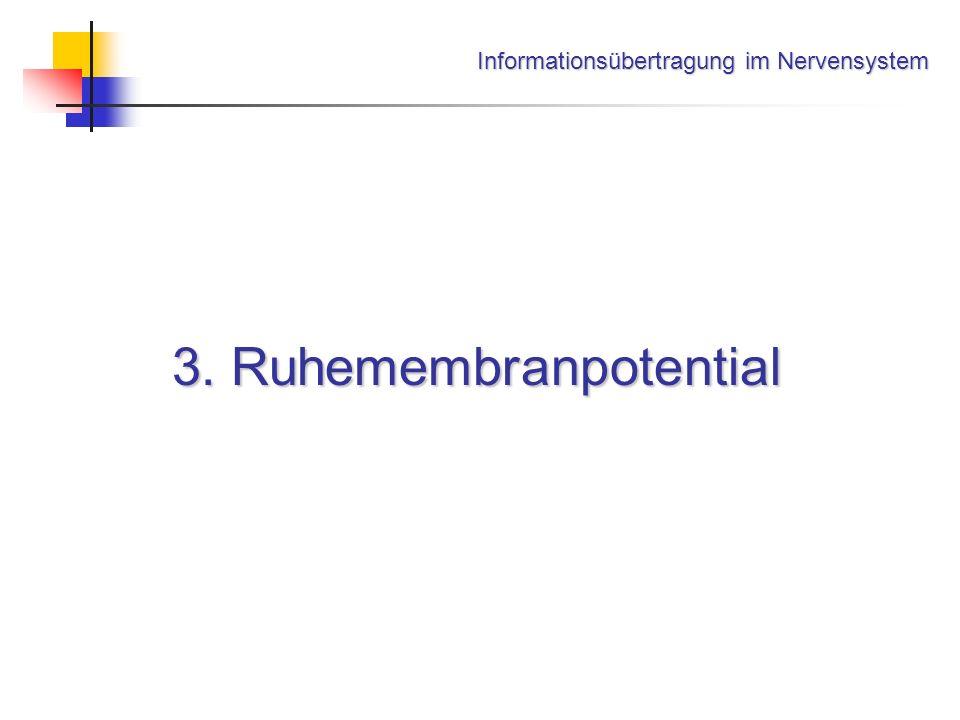 Informationsübertragung im Nervensystem