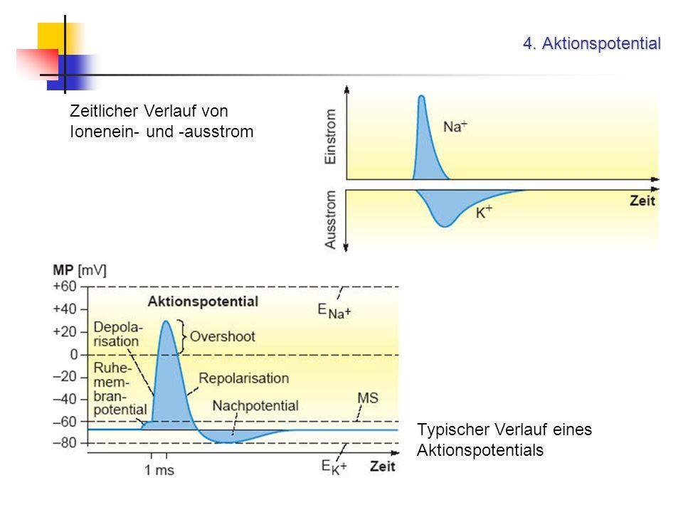 4. Aktionspotential Zeitlicher Verlauf von Ionenein- und -ausstrom.