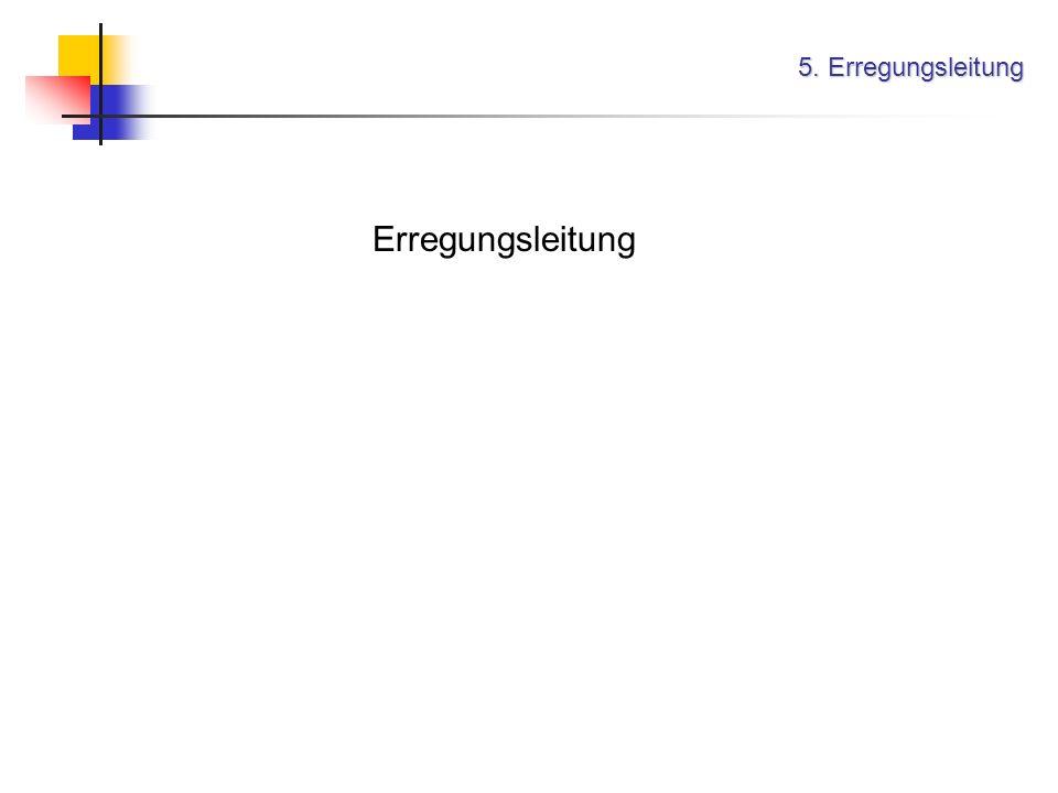 5. Erregungsleitung Erregungsleitung