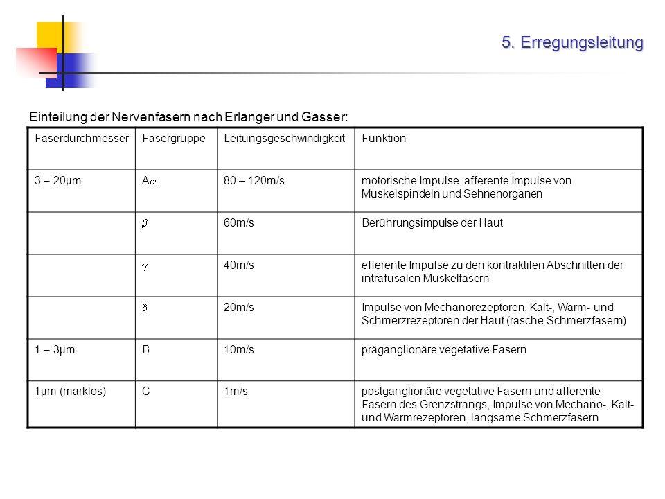 5. Erregungsleitung Einteilung der Nervenfasern nach Erlanger und Gasser: Faserdurchmesser. Fasergruppe.
