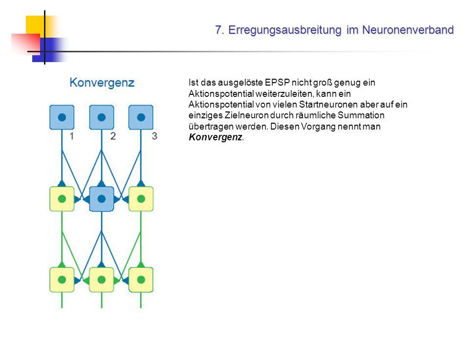 7. Erregungsausbreitung im Neuronenverband