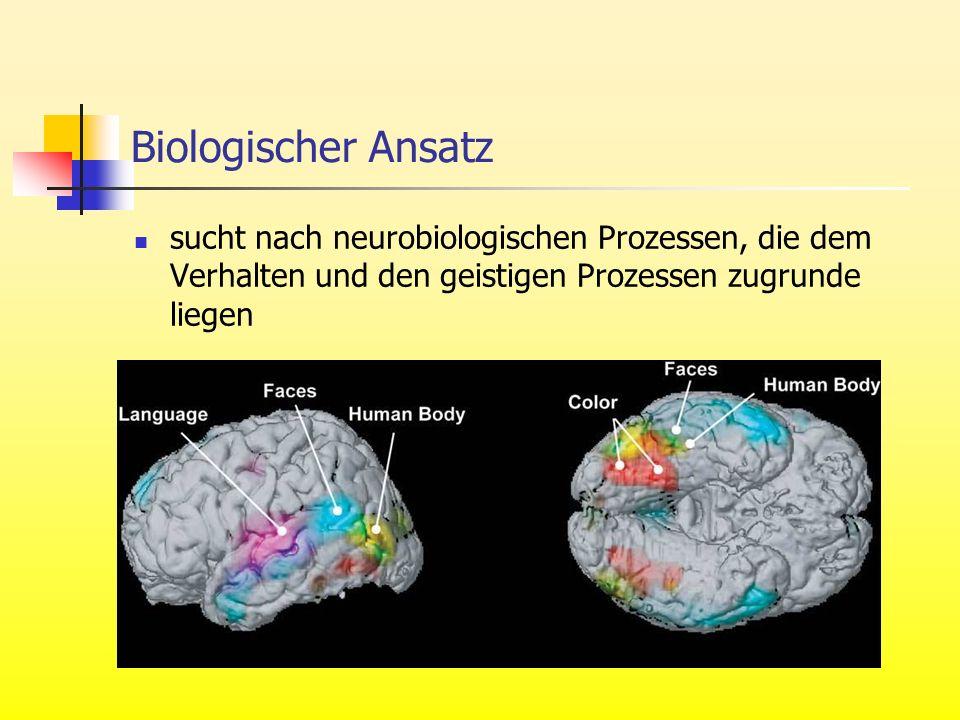 Biologischer Ansatz sucht nach neurobiologischen Prozessen, die dem Verhalten und den geistigen Prozessen zugrunde liegen.