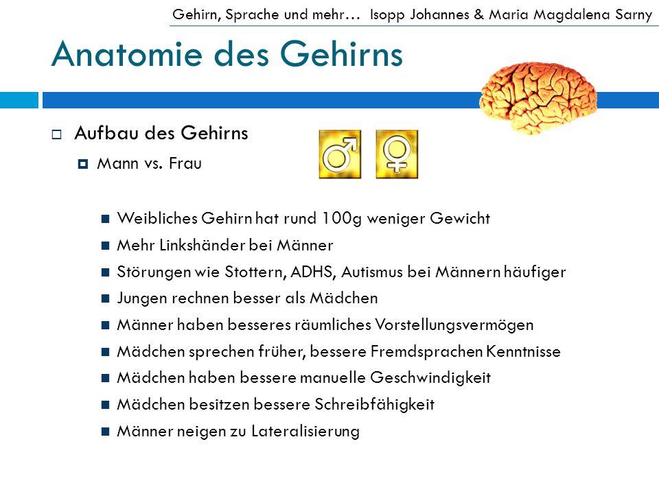 Anatomie des Gehirns Aufbau des Gehirns Mann vs. Frau