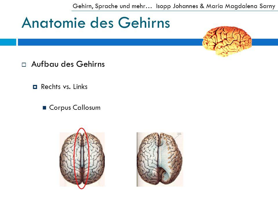 Anatomie des Gehirns Aufbau des Gehirns Rechts vs. Links