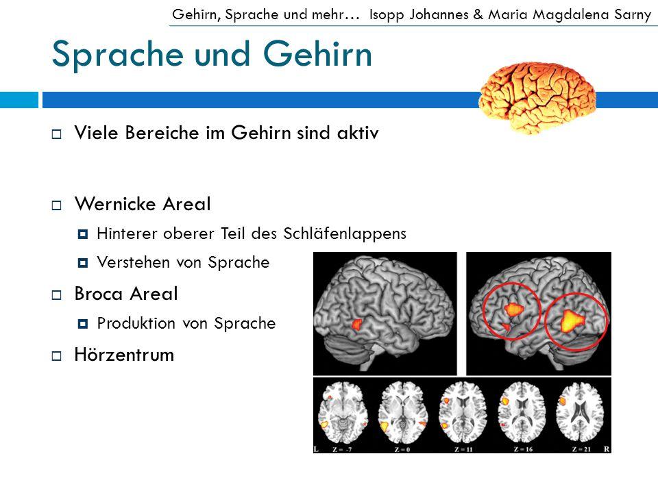Sprache und Gehirn Viele Bereiche im Gehirn sind aktiv Wernicke Areal