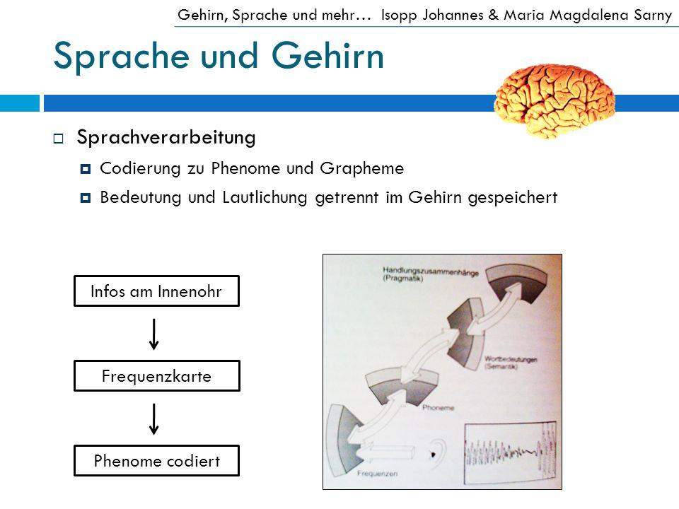 Sprache und Gehirn Sprachverarbeitung