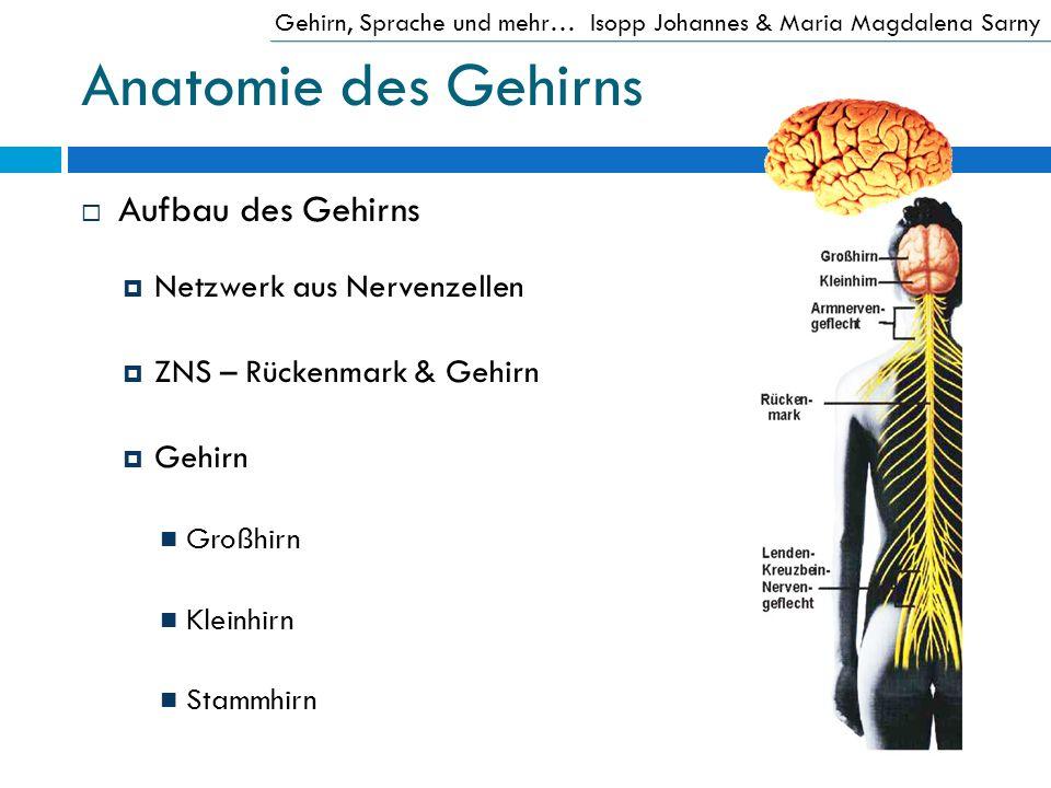 Anatomie des Gehirns Aufbau des Gehirns Netzwerk aus Nervenzellen
