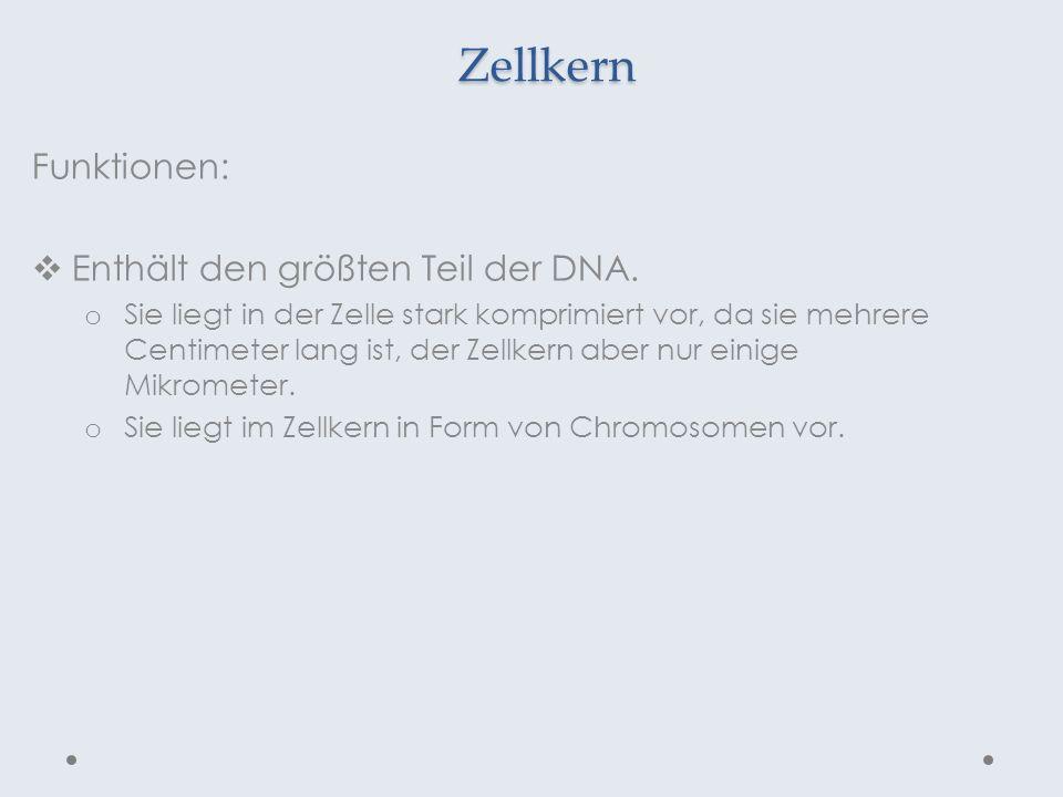 Zellkern Funktionen: Enthält den größten Teil der DNA.