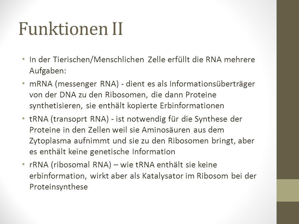 Funktionen II In der Tierischen/Menschlichen Zelle erfüllt die RNA mehrere Aufgaben: