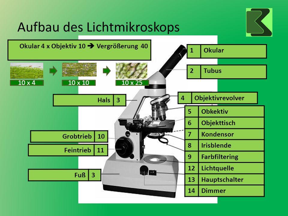 Aufbau des Lichtmikroskops
