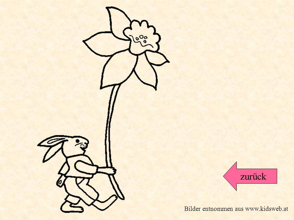 zurück Bilder entnommen aus www.kidsweb.at