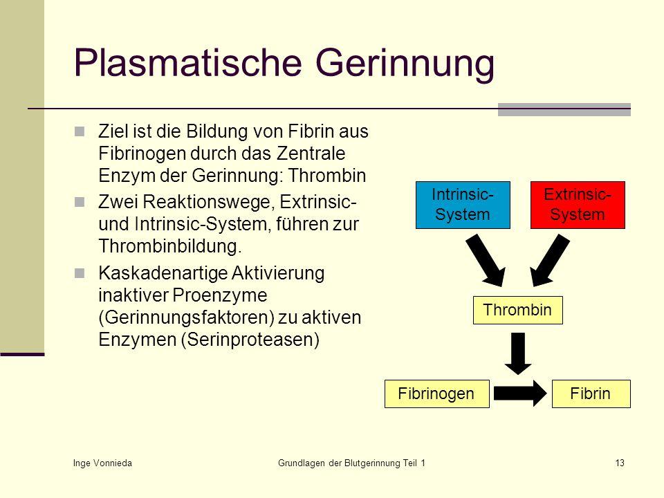 Plasmatische Gerinnung