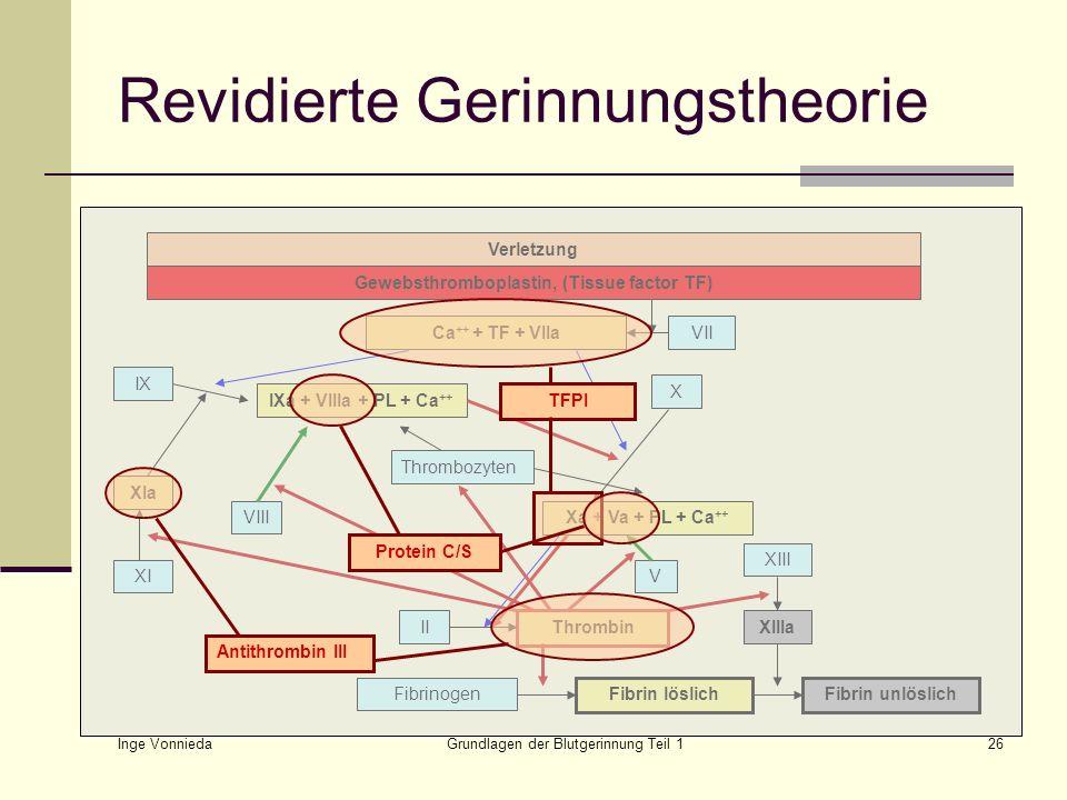 Revidierte Gerinnungstheorie