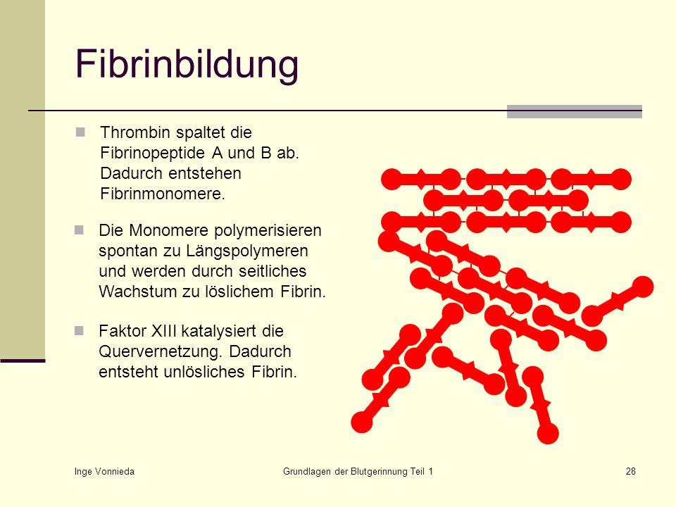 Grundlagen der Blutgerinnung Teil 1