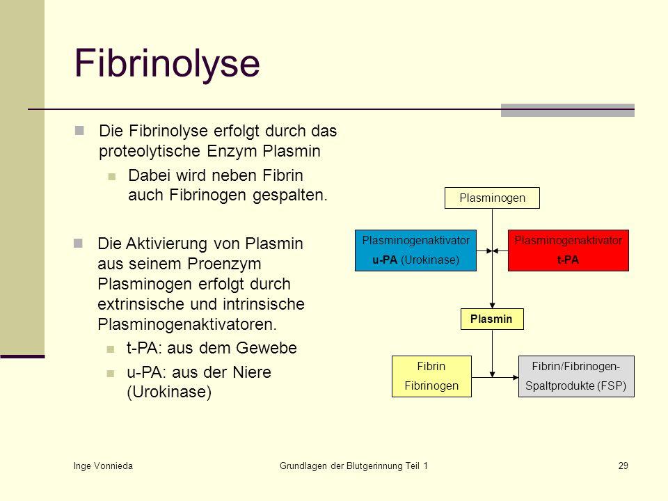 Fibrinolyse Die Fibrinolyse erfolgt durch das proteolytische Enzym Plasmin. Dabei wird neben Fibrin auch Fibrinogen gespalten.