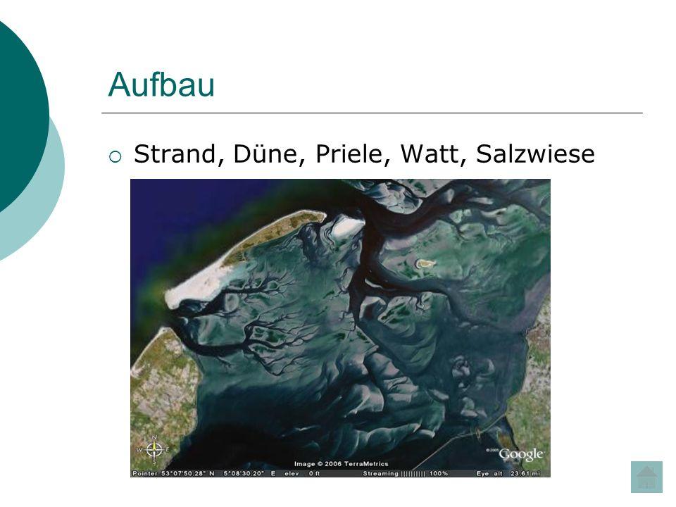 Aufbau Strand, Düne, Priele, Watt, Salzwiese